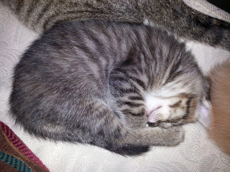 El tomar una siesta del gatito imagenes de archivo