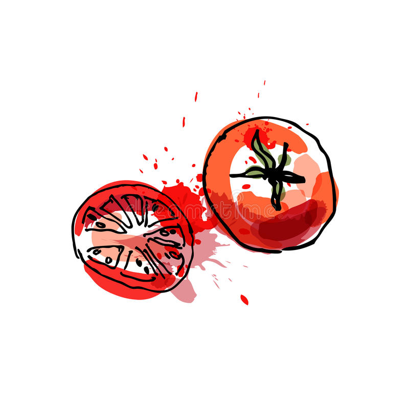 El tomate, dibujando por la acuarela y la tinta con la pintura salpica en whi stock de ilustración