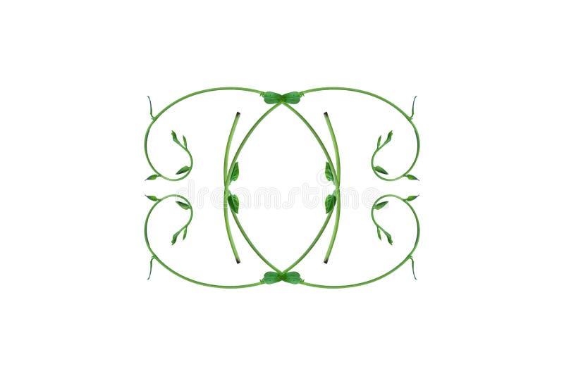 El top único de las formas de hoja una frontera aislada del bosque con un fondo blanco, disposición creativa, se puede utilizar c stock de ilustración