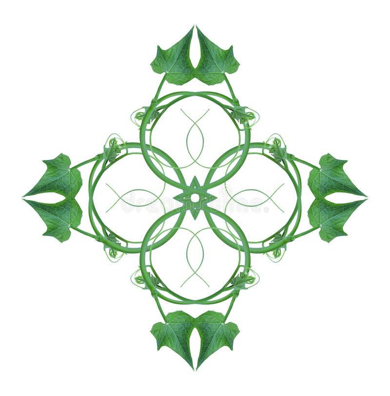 El top único de las formas de hoja una frontera aislada del bosque con un fondo blanco, disposición creativa, se puede utilizar c libre illustration