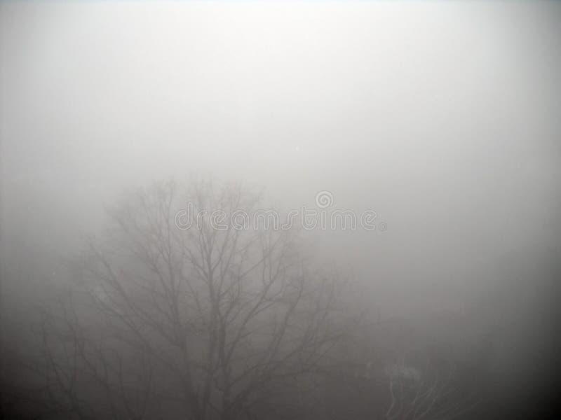 El top y el coche del árbol en invierno pesado se empañan foto de archivo