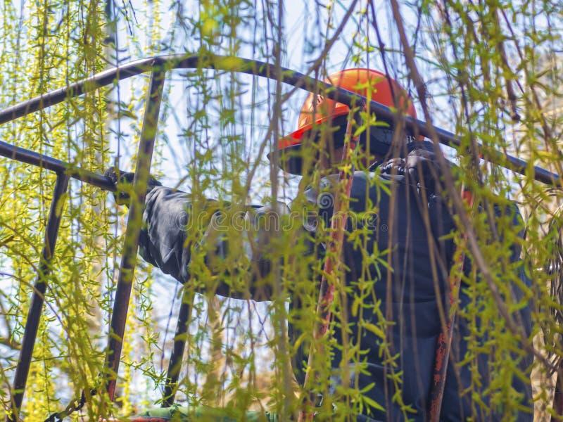 El trabajador corta las ramas del árbol imagen de archivo libre de regalías