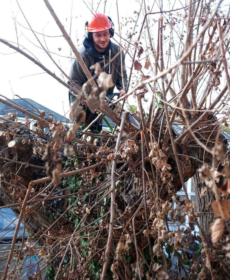 El trabajador corta ramas de árbol imágenes de archivo libres de regalías