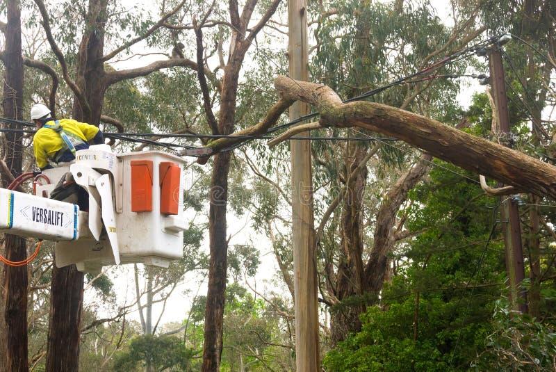El trabajador de los servicios de emergencia se prepara para cortar el árbol fotos de archivo