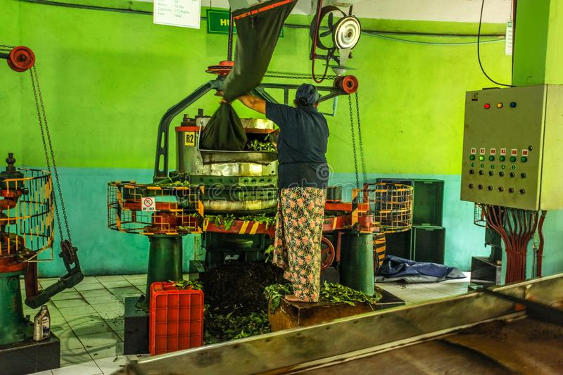 El trabajador de sexo femenino desconocido en la fábrica del té de Kadugannawa actúa la máquina de humectación del té crudo foto de archivo libre de regalías