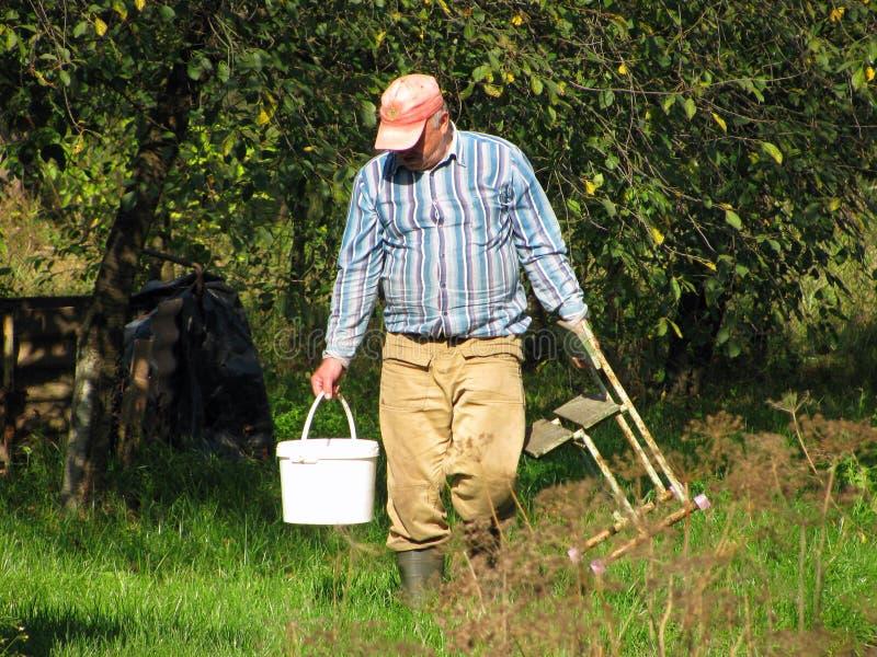 El trabajo agrícola es granjero en el jardín en su propia área de la pista de aterrizaje fotos de archivo libres de regalías