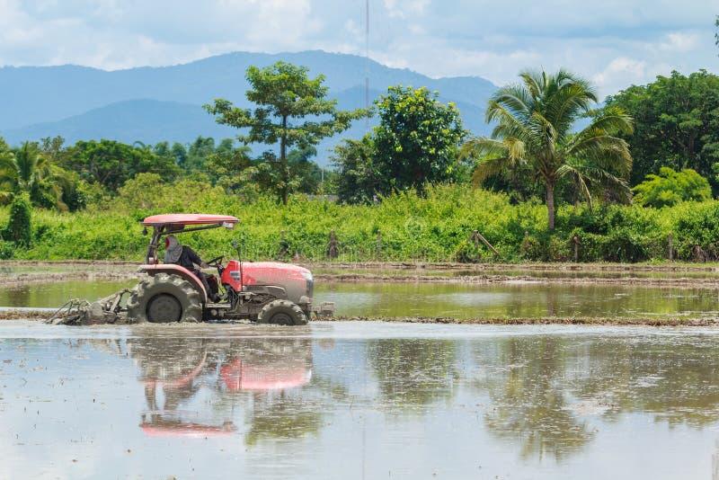 El tractor está arando en campo del arroz foto de archivo