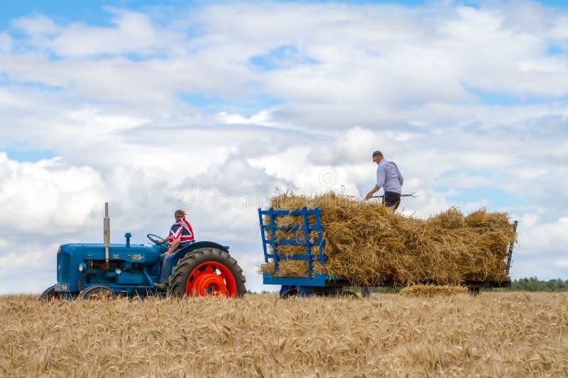 El tractor y el remolque azules del fordson del viejo vintage en cosecha colocan foto de archivo libre de regalías