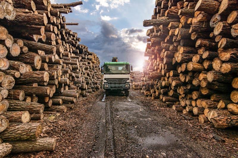 El transporte del pino abre una sesión una serrería foto de archivo libre de regalías