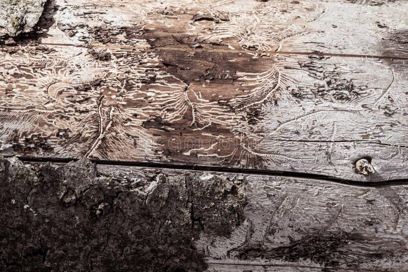 El tronco de un árbol fotos de archivo