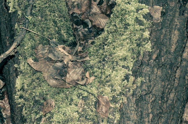 El tronco del árbol viejo cubierto de mosquitos en el bosque fotos de archivo libres de regalías