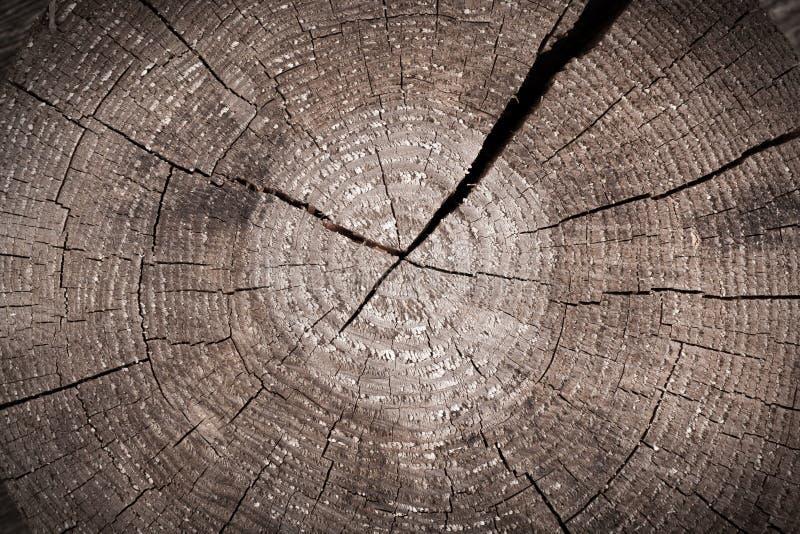 El tronco marrón viejo cortó con los anillos anuales agrietados imágenes de archivo libres de regalías