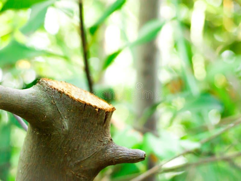 El tronco tres en el bosque imagen de archivo libre de regalías