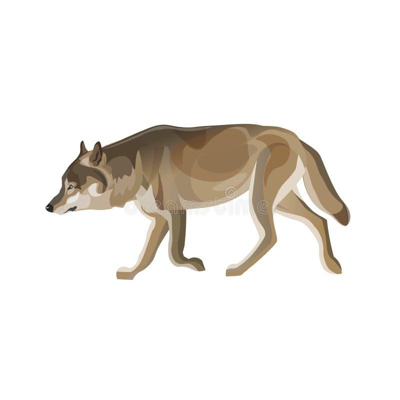 El trotar del lobo gris libre illustration