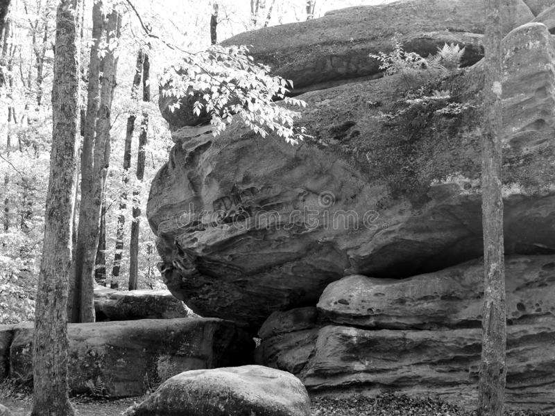 El trueno oscila en el parque de estado de Allegany blanco y negro imágenes de archivo libres de regalías
