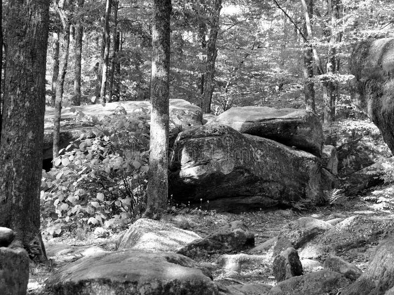 El trueno oscila en el parque de estado de Allegany blanco y negro fotos de archivo libres de regalías