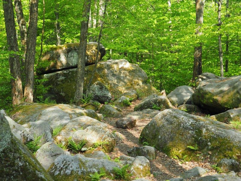 El trueno oscila en el parque de estado de Allegany imagen de archivo
