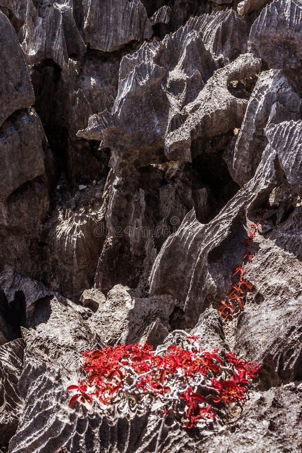 El Tsingy de Ankarana fotografía de archivo libre de regalías