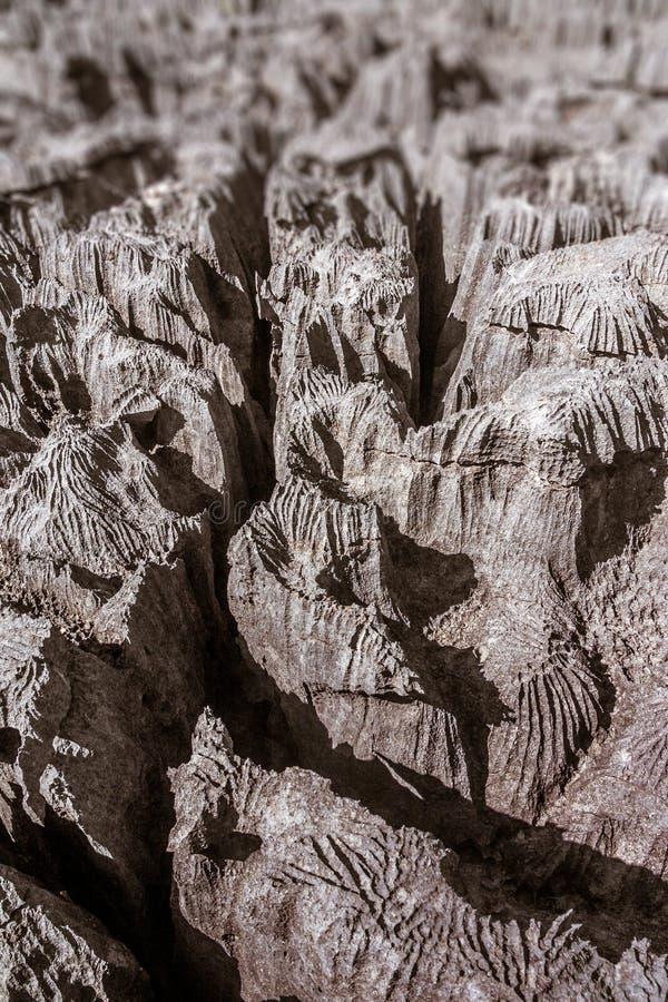 El Tsingy de Ankarana imagen de archivo