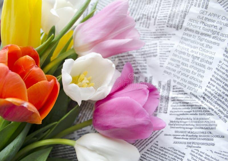 El tulipán colorido floreciente hermoso florece en los collages de los recortes del texto Fondo del diseño floral?, contexto, dis foto de archivo libre de regalías