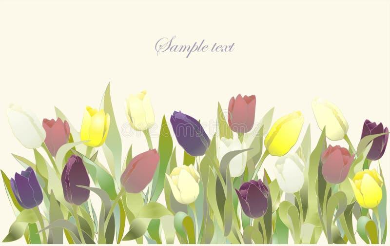El tulipán florece la frontera. Tarjeta de felicitación con los tulipanes ilustración del vector
