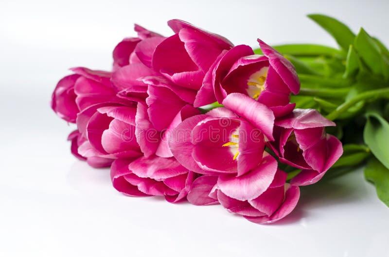 El tulipán rosado florece las esquinas aisladas en el fondo blanco imagen de archivo libre de regalías