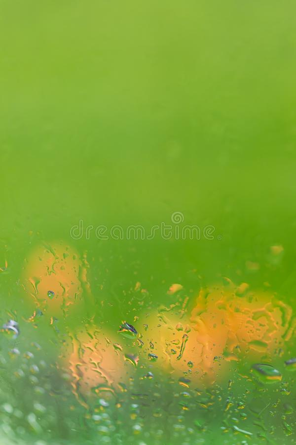 El tulipán a través de una lluvia cubrió la ventana foto de archivo