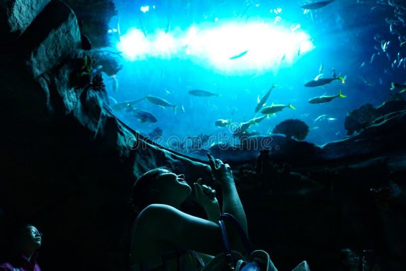 El turista feliz toma las fotos del acuario, Hong Kong Ocean Park foto de archivo libre de regalías