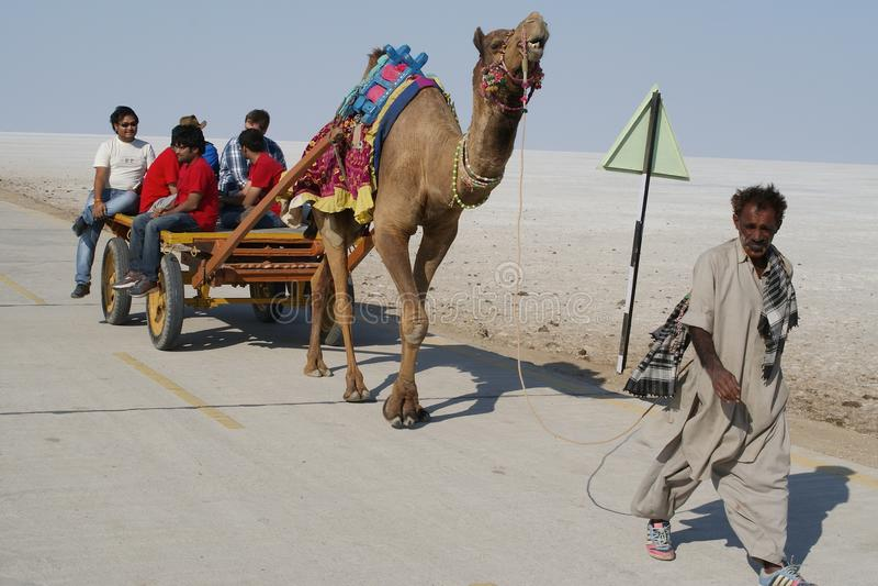 El turista que viajaba en la India en un carro tiró por el camello imágenes de archivo libres de regalías