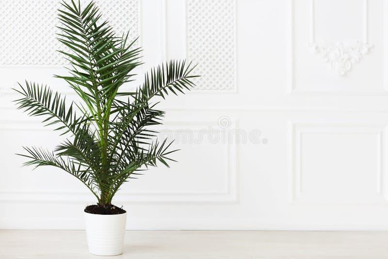 El vacío en luz entona el sitio con la planta de la palma foto de archivo libre de regalías