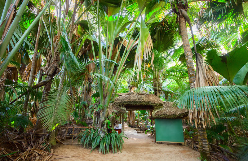 El valle de mayo del bosque de la palma de Vallee Del Mai, isla de Praslin, Seychelles fotografía de archivo libre de regalías