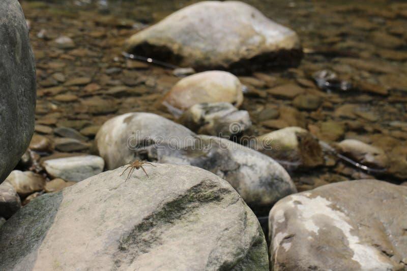 El valle se cose con las pequeñas corrientes del agua foto de archivo