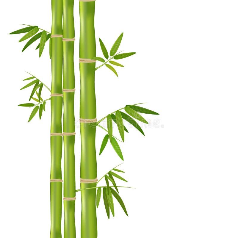 El vector aisló el ejemplo realista de la planta de bambú orgánica verde aislada en el fondo blanco libre illustration