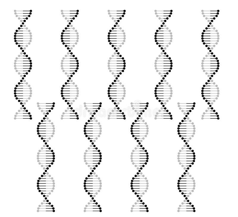 El vector de la genética del cromosoma del icono de la DNA fijó el sistema de la molécula del gen de la DNA del vector ilustración del vector