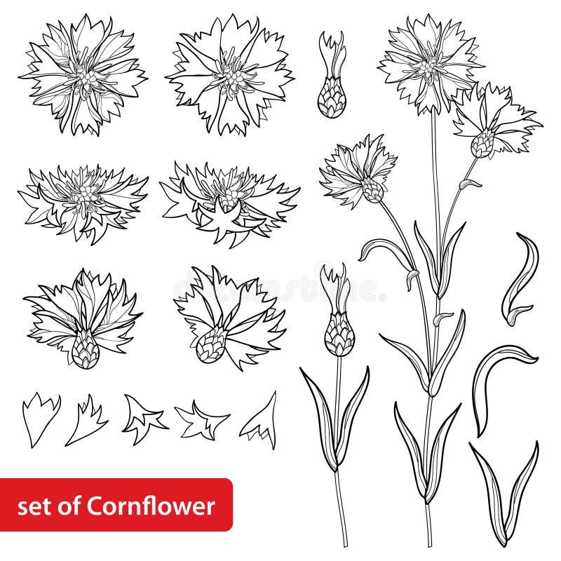 El vector fijó con el manojo de la flor del aciano o de la centaurea o del Centaurea del esquema, brote y hoja en negro aislados  ilustración del vector