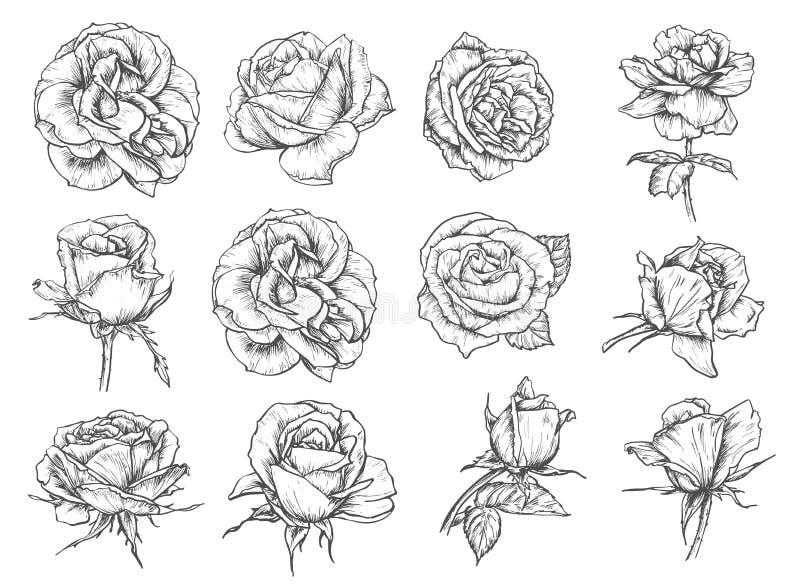 El vector florece iconos del bosquejo de las rosas stock de ilustración