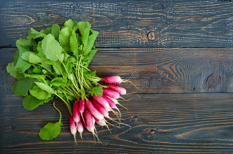 El verano cosechó el rábano rojo Verduras orgánicas crecientes Manojo grande de rábano jugoso fresco crudo del jardín fotografía de archivo