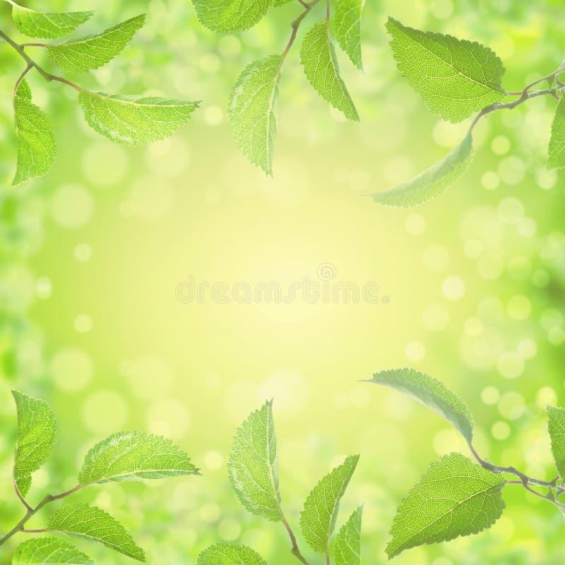 El verano de la primavera deja el fondo con la luz y el bokeh del sol fotografía de archivo