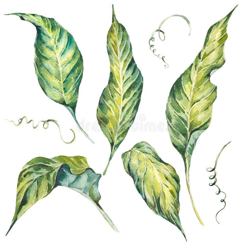 El verano fijado y de verde exótico de la acuarela se va ilustración del vector