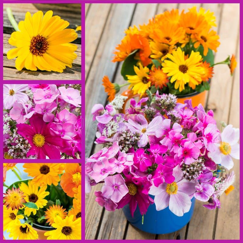 El verano florece el collage imagen de archivo