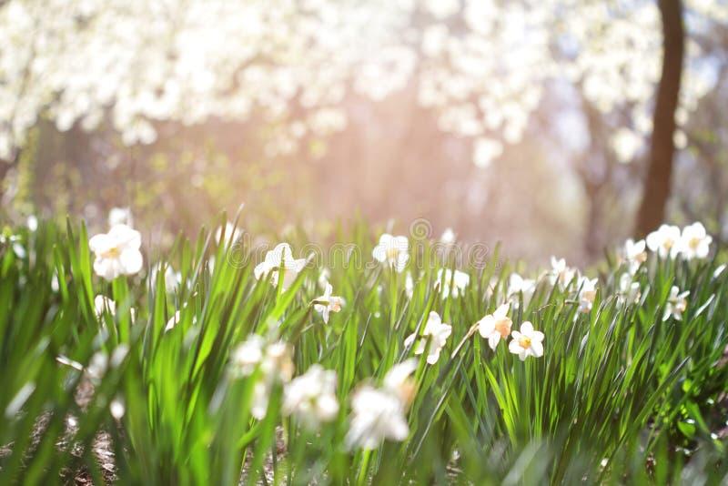El verano florece el fondo fotos de archivo