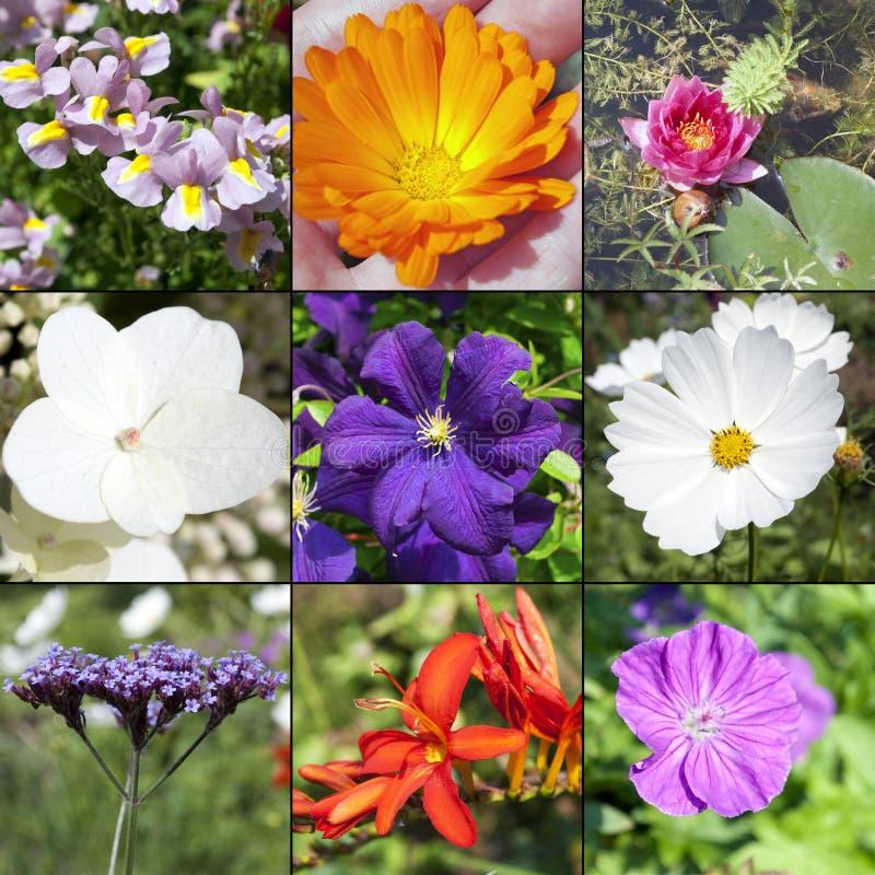 El verano florece la colección foto de archivo