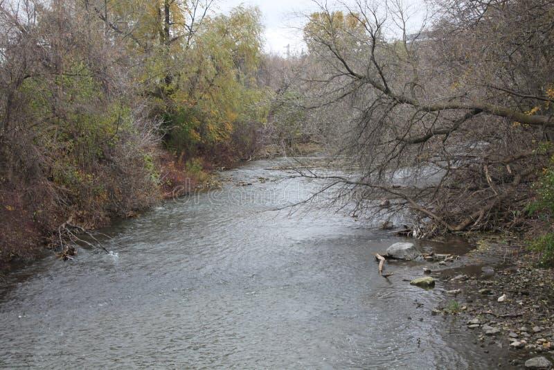 El verano ha acabado que los árboles nunca han caído las hojas del theyre pero los cambios del río imagen de archivo libre de regalías