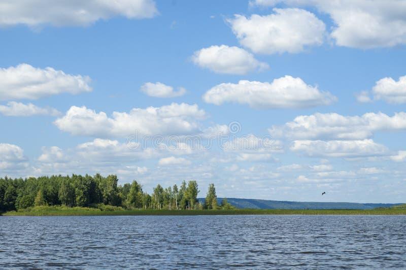 El verano se nubla árboles de las cañas del río foto de archivo libre de regalías
