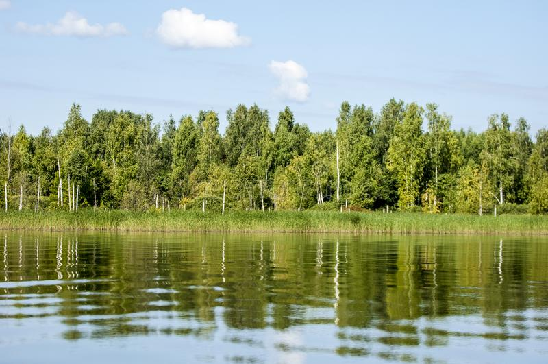 El verano se nubla árboles de las cañas del río fotos de archivo