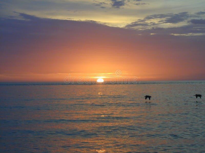 El verano Sun que se hunde adentro al Golfo de México como pájaros desnata sobre el agua imagenes de archivo