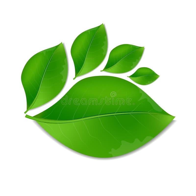 El verde de la hoja deja símbolo de la naturaleza del vector del ejemplo del logotipo realista ilustración del vector