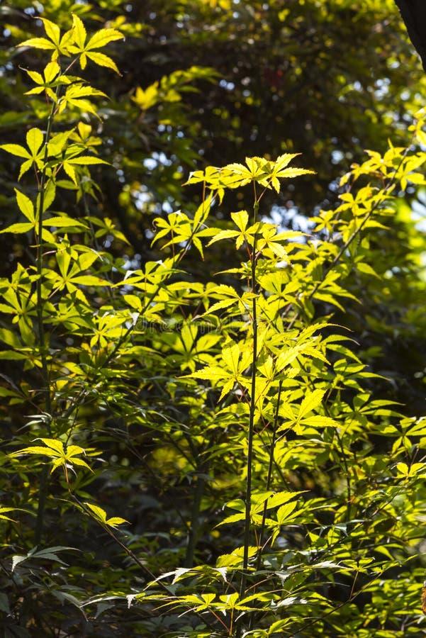 El verde de la luz del sol se va en el palacio de la dinastía de Nanjing Ming - jardín zhan foto de archivo libre de regalías