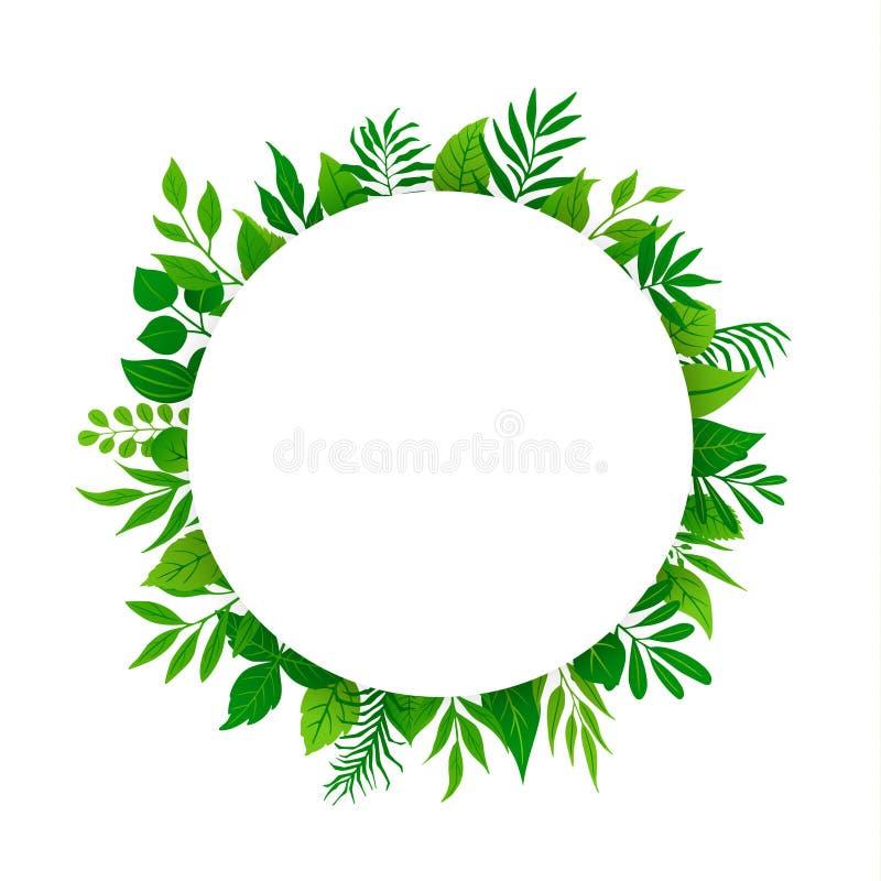 El verde de la primavera del verano deja a verdor del follaje de las plantas de las ramitas de las ramas el marco redondo del cír stock de ilustración