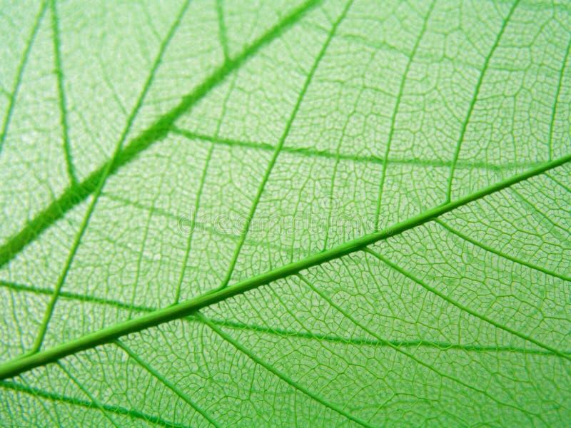 El verde deja al detalle imagenes de archivo